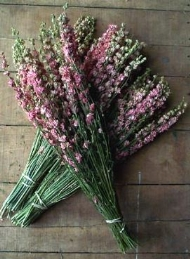 cheap wedding decorations dried larkspur